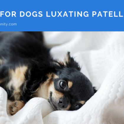 cbd-oil-for-dogs-luxating-patella