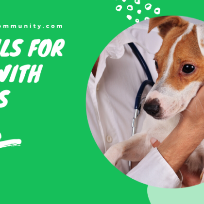 cbd-oils-for-dogs-with-colitis