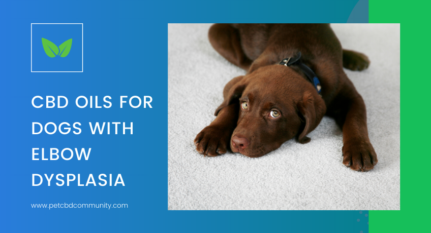 cbd-oils-for-dogs-with-elbow-dysplasia