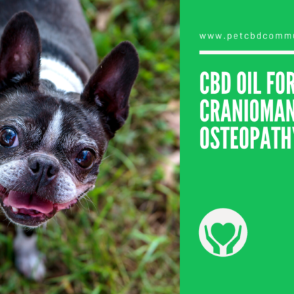 cbd-oil-for-dogs-craniomandibular-osteopathy