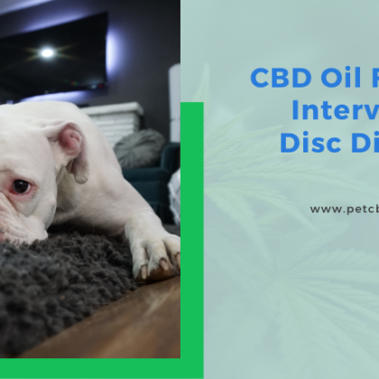 cbd-oil-for-dogs-intervertebral-disc-disease-in-dogs
