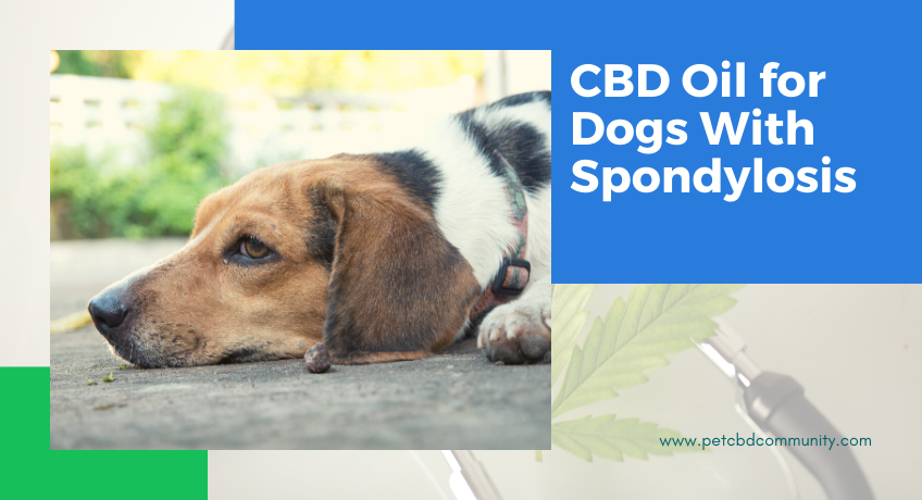 cbd-oil-for-dogs-spondylosis