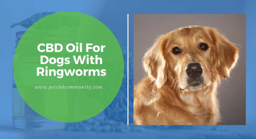 cbd-oil-for-dogs-with-ringworms