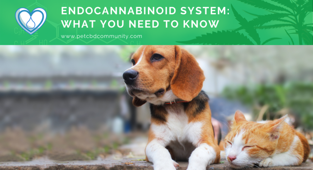 endocannabinoid-system-what-you-need-to-know